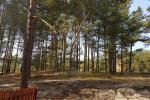 Vienistabas dzīvoklis ar skatu uz priežu mežu Nidā, Kuršu kāts, Lietuva