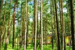 Koka mājas priežu mežā un pie baznīcas Sventoji