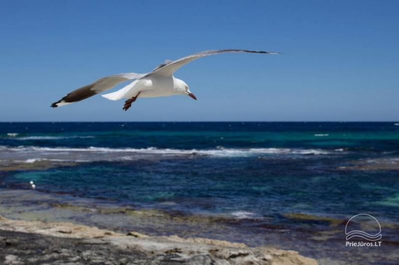 Namelis poilsiui Balči ant jūros kranto!