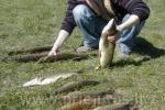 Valčių nuoma, žvejyba Ventos upėje, Svečių namai ir kempingas Ventaskrasti - 3