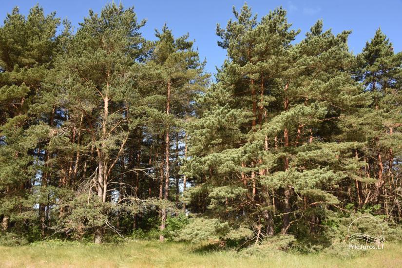 Māja pārdošanai Pape, Latvija ar 0,5 hektāru zemes gabalu pie jūras - 17