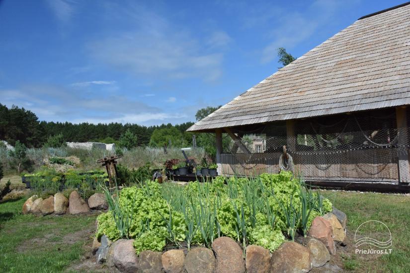 """Kavinė šventėms sodyboje """"JURGI"""" Papėje 200 m iki jūros - 5"""